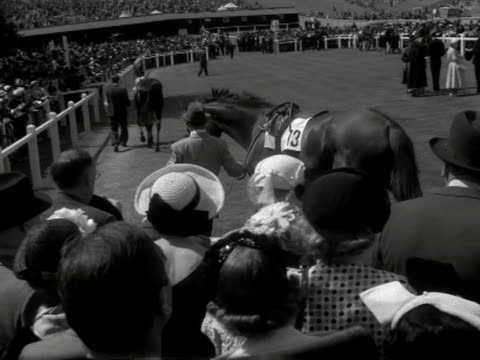 horses are walked around the paddock at goodwood race course prior to racing in the goodwood cup - goodwood racecourse stock videos & royalty-free footage