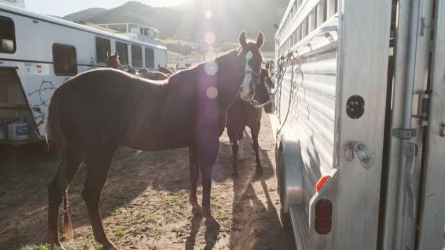 Horses at a Trailer
