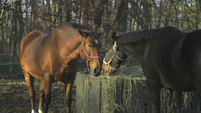 HD: Horses at home
