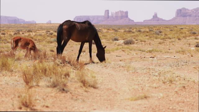 vídeos de stock e filmes b-roll de horses at the monument valley - esfomeado