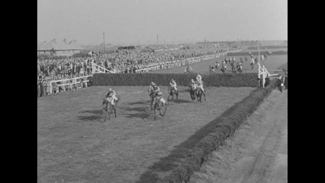horses at the starting gate at aintree racecourse / grand national steeplechase begins / first jump several horses and jockeys down / king george vi... - hurdling horse racing stock videos and b-roll footage