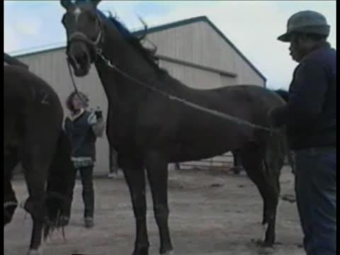 Horses breeding at Prairieland Farm in Illinois