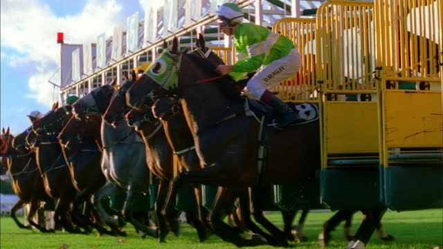 horses burst from the starting gate as a race begins. - hooved animal stock videos & royalty-free footage