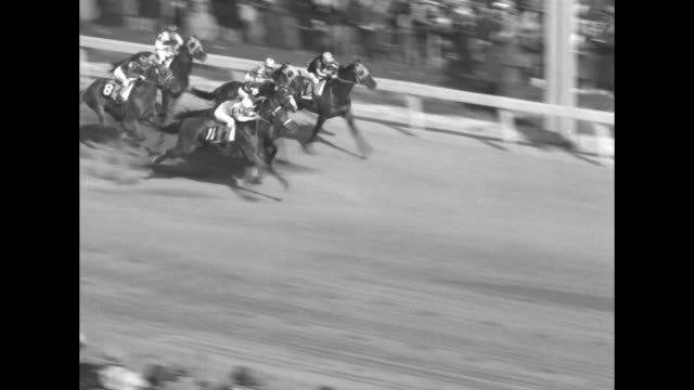 vidéos et rushes de horses burst out of starting gate run down racetrack / rear shot horses round turn with vo crowd noise and race being called over loudspeaker / count... - équidés