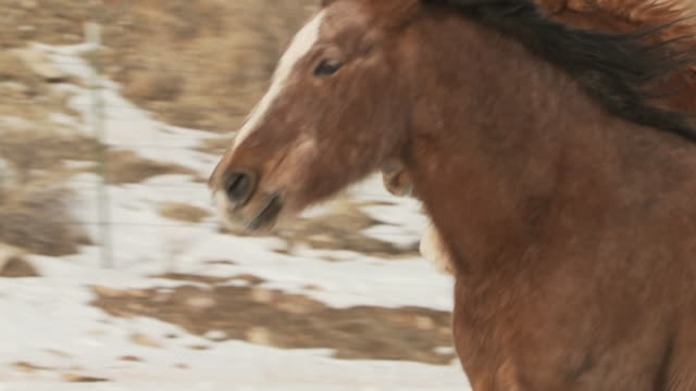 slo mo cu pan horses cantering in snow in slow motion / shell, wyoming, usa - 数匹の動物点の映像素材/bロール
