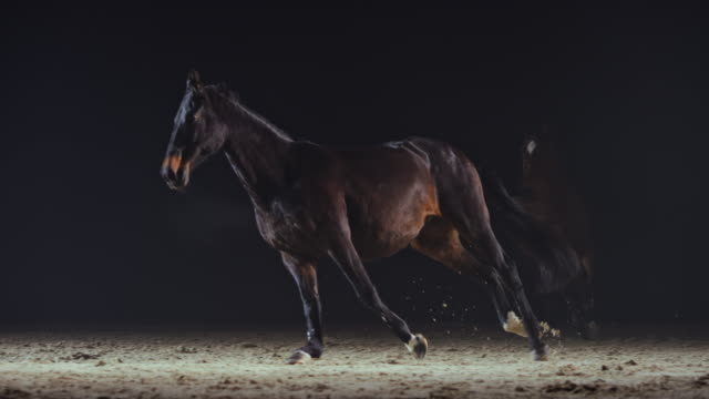 slo mo horses cantering in the riding hall at night - brown stock videos & royalty-free footage