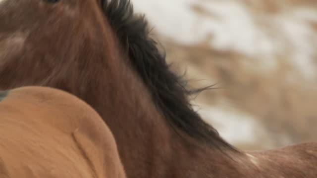 SLO MO CU PAN Horses cantering / Shell, Wyoming, USA
