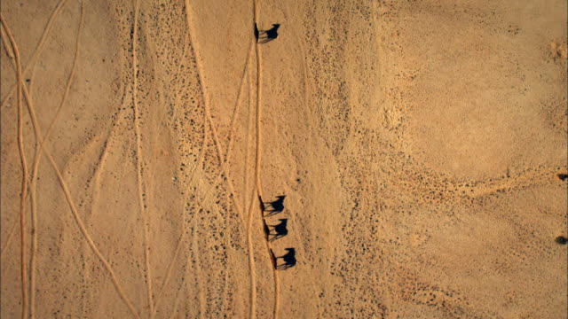 Horses cross the desert