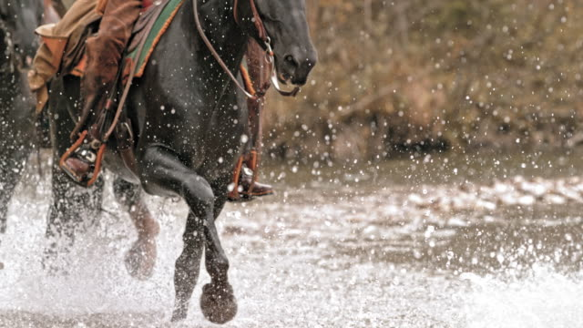 slo mo td horses crossing a river - medium group of animals video stock e b–roll