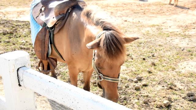 stockvideo's en b-roll-footage met paarden dansen - vachtpatroon