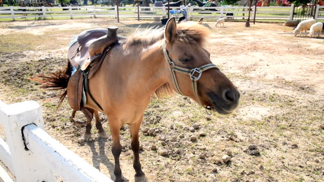horses dancing - animal leg stock videos & royalty-free footage