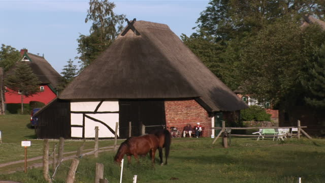 ws horses eating grass in front of thatched roof building  /ahrenshoop , mecklenburg-western pomerania, germany - thatched roof stock videos & royalty-free footage