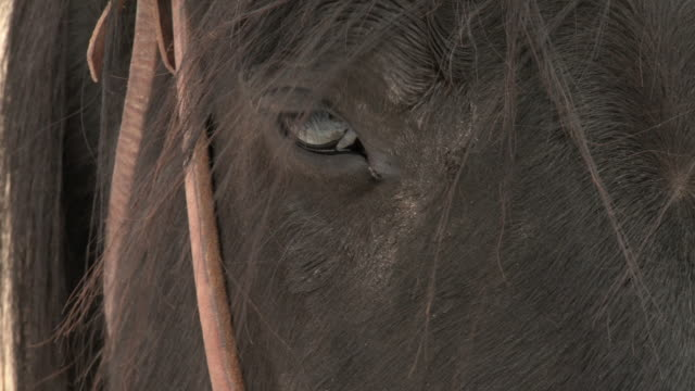 cu horse's face with bridle / shell, wyoming, united states - bridle stock videos & royalty-free footage