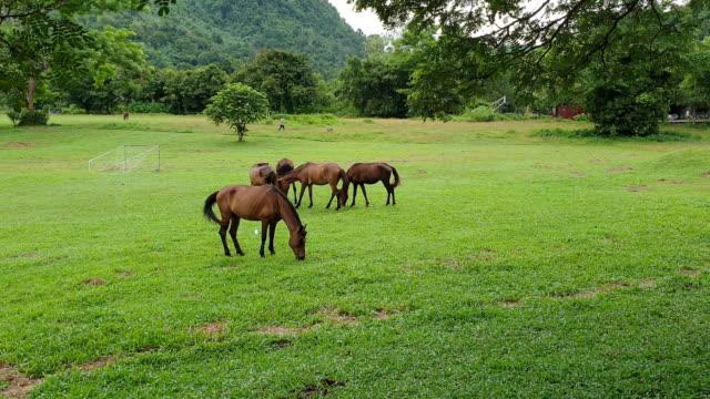 vídeos de stock e filmes b-roll de horses feeding grass. - pasture