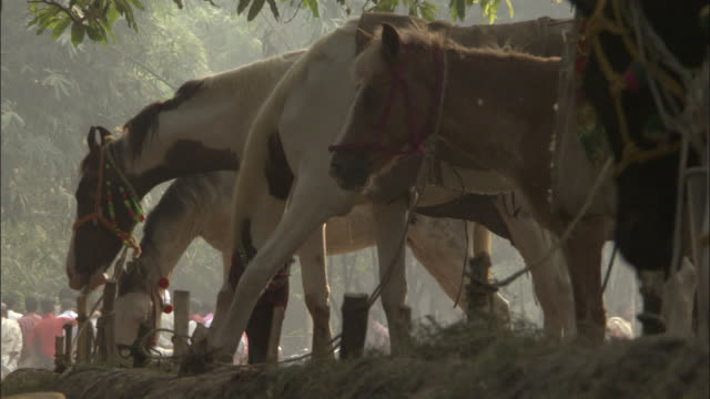 Horses for sale at Sonepur Mela Available in HD.