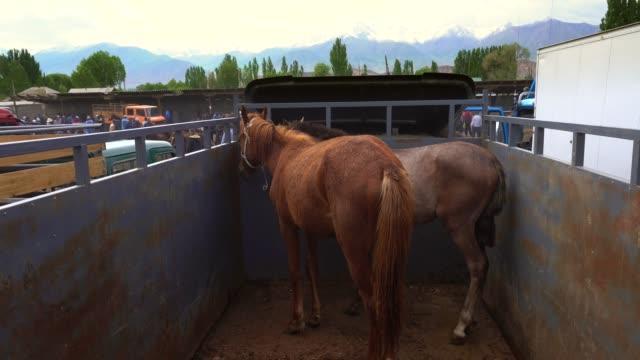 Pferde zum Verkauf auf dem Tiermarkt in Kirgisistan