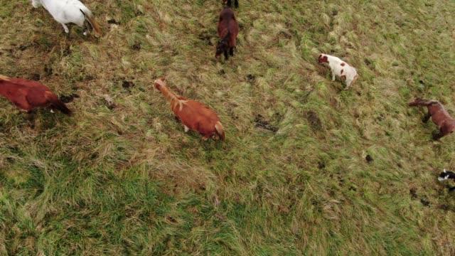 馬の上から - 雄馬点の映像素材/bロール