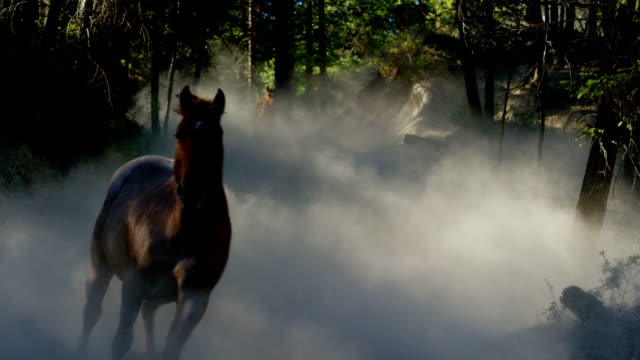 horses galloping in roundup with cowboys dude ranch - herding stock videos & royalty-free footage