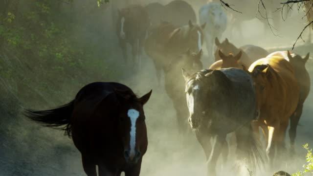 vídeos de stock, filmes e b-roll de horses galloping in roundup with cowboys dude ranch - território selvagem