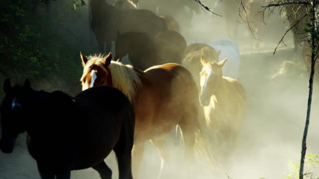 vídeos de stock, filmes e b-roll de horses galloping in roundup with cowboys dude ranch - rancho