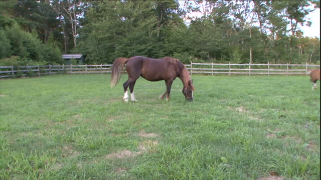 horses graze and romp in a pasture. - horse stock videos & royalty-free footage