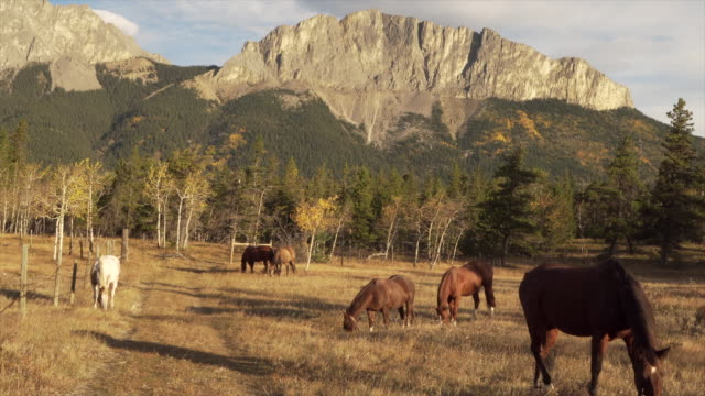 Horses graze in mountain meadow