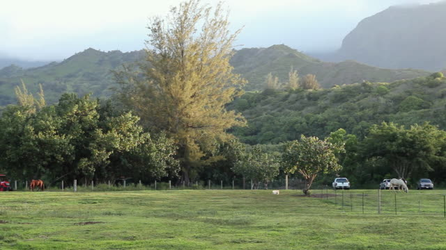 stockvideo's en b-roll-footage met ws pan horses grazing at landscape of mountains / kauai, hawaii, united states - middelgrote groep dieren
