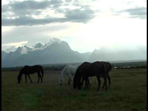 ms, horses grazing in field at teton mountains, grand teton national park, wyoming, usa - piccolo gruppo di animali video stock e b–roll