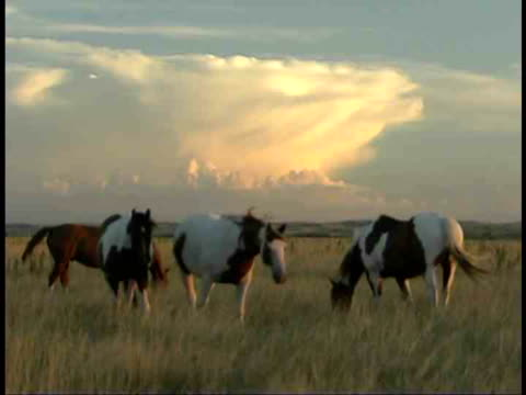 ms, horses grazing in field, south dakota, usa - piccolo gruppo di animali video stock e b–roll