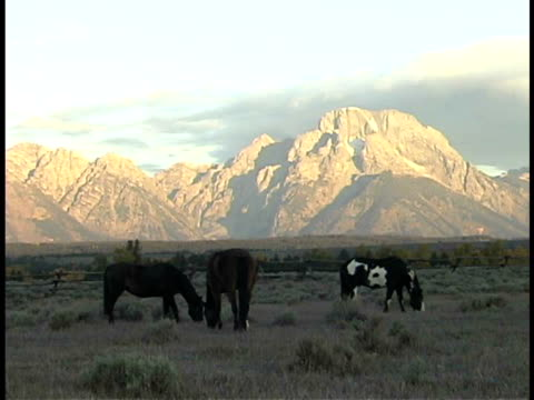 ms, horses grazing in field, teton mountains in background, grand teton national park, wyoming, usa - stationary process plate stock videos & royalty-free footage