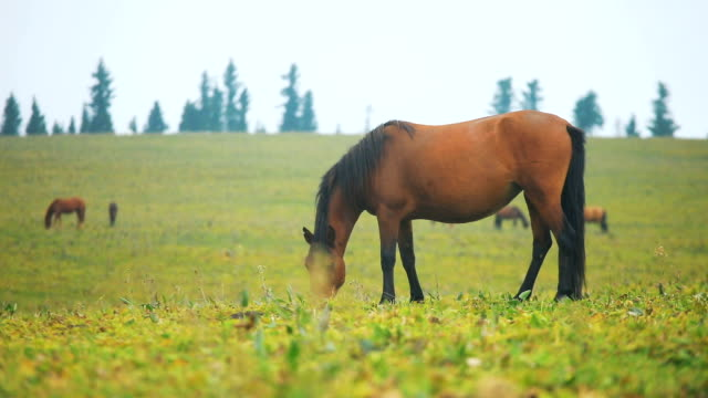 horses grazing in field - horse stock videos & royalty-free footage