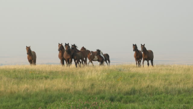 Horses grazing in green pasture