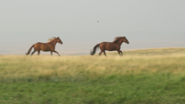 horses grazing in green pasture - wide shot stock videos & royalty-free footage