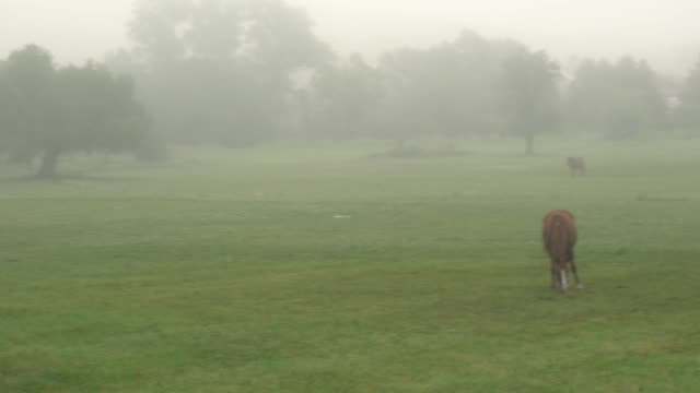 horses grazing in the fog - grazing stock videos & royalty-free footage