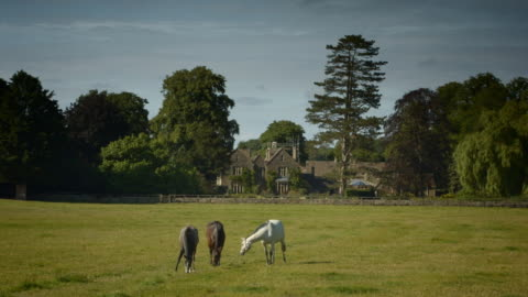 horses grazing lush pasture in the cotswolds - england stock videos & royalty-free footage