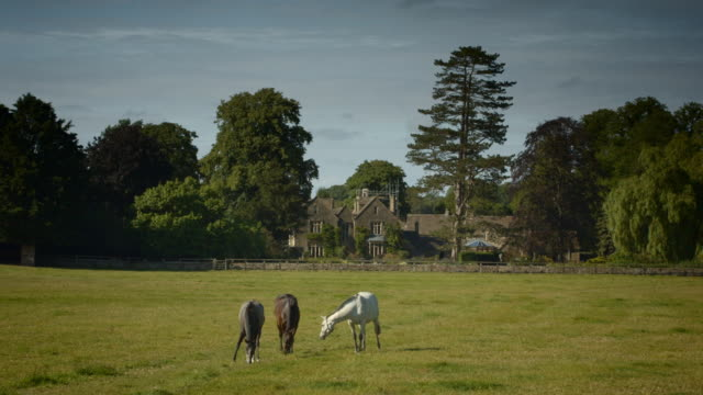 horses grazing lush pasture in the cotswolds - grazing stock videos & royalty-free footage