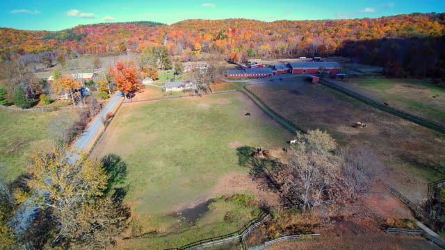 WS AERIAL POV Horses grazing on field, barn in background