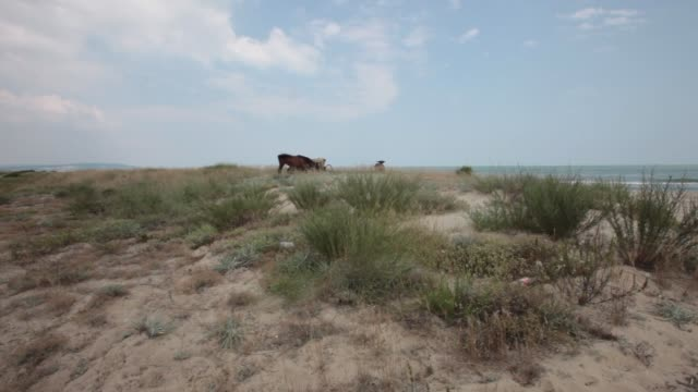 horses grazing on steppe pastures at longoza nature reserve in bulgaria - 1951 stock videos & royalty-free footage