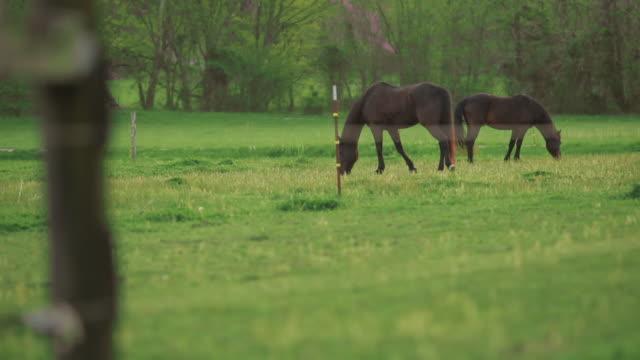 horses grazing - arbetsdjur bildbanksvideor och videomaterial från bakom kulisserna