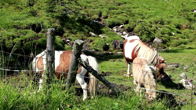 horses grazing - mpeg video format stock videos & royalty-free footage