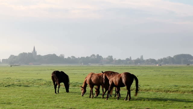 Horses Herding In Meadow Near Amsterdam, The Netherlands