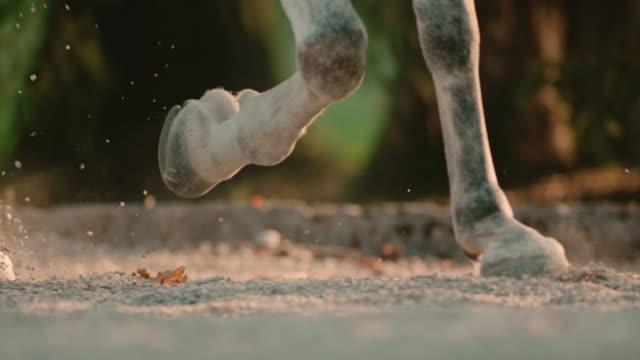 slo mo horse der hufe auf sandy ground - huf stock-videos und b-roll-filmmaterial
