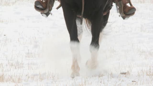 vídeos de stock e filmes b-roll de slo mo cu horses' hooves trotting in snow / shell, wyoming, usa - cavalgar