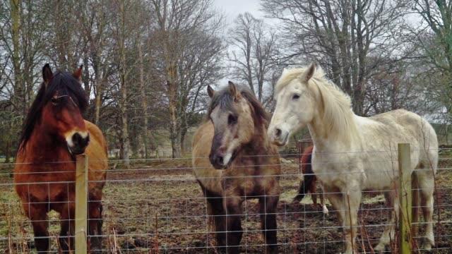 pferde in einem feld warten darauf, gefüttert zu werden - zugpferd stock-videos und b-roll-filmmaterial