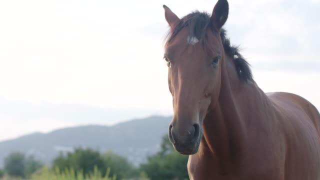 vidéos et rushes de horses in green field - 20 secondes et plus