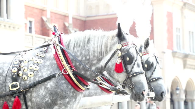 horses in krakow - horsedrawn stock videos & royalty-free footage