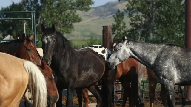 horses in pen. - medium group of animals stock videos & royalty-free footage