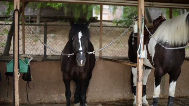 MS PAN Horses in stable / Los Angeles, CA, United States