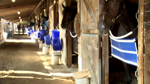 horses in stalls w/ their heads out, horse in fg w/ a lot of head movement. thoroughbreds, horse racing - träns bildbanksvideor och videomaterial från bakom kulisserna