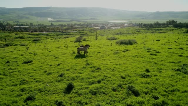 vidéos et rushes de horses in the landscape of the lower galilee - valley